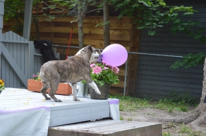 Maggie and balloons